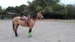 Égua pronta de tambor!!!