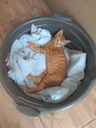 estou doando  esse gatinho pra quem realmente gosta