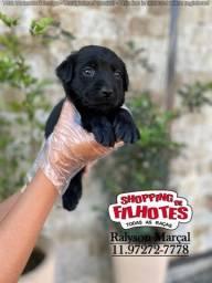 Labrador todas as cores em 12x sem juros, temos 12 clinicas veterinárias