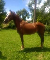 Vendo cavalo valor 3.500 mil