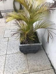 Vasos com plantas(8)
