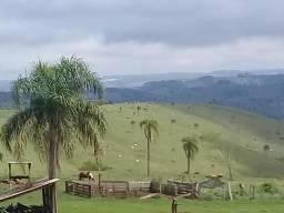 Fazenda com 250 alq em Guaraniaçu-Pr, aceita permuta parcial por imóveis ou por faz no MT