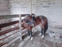 Égua top de montaria!!