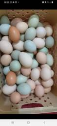 Título do anúncio: Ovos galado