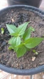 Vendo um inalador semi novo