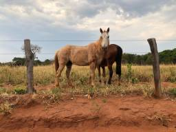 Título do anúncio: Cavalos de campo