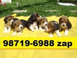 Canil Filhotes Cães BH Lindos Beagle Yorkshire Basset Maltês Shihtzu Pug