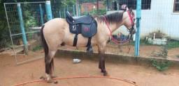Vendo cavalo/preciso vender rápido