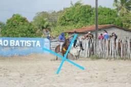Título do anúncio: Cavalo de esquerda