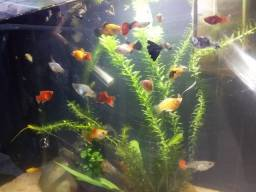 Aquario fauna