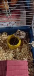 Título do anúncio: Vendo hamster Maluna