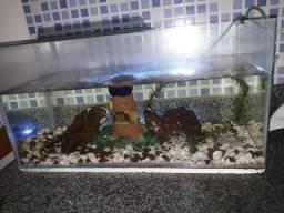 Vendo aquário 60×30