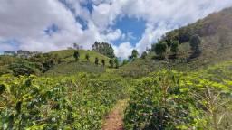 Fazenda com 80 mil pés de café  300 de abacate