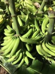 Banana da terra Maranhão