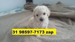 Canil Filhotes Cães Excelentes BH Poodle Beagle Lhasa Yorkshire Bulldog Shihtzu Maltês