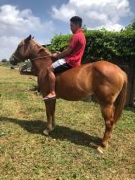 Título do anúncio: Cavalos de passeio à venda 15000 os dois