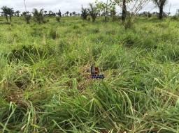 Título do anúncio: Fazenda com 1 dormitório à venda, por R$ 4.500.000 - Zona Rural - Cujubim/RO