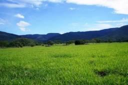 Fazenda 1750 ha N.S. Livramento MT
