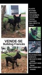 Fêmea bulldog francês - aceito proposta