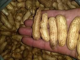 Vendo amendoim vermelho