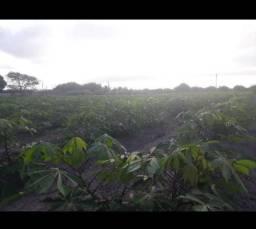 Excelente Fazenda com 20 hectares no jardins próximo do arena com irrigação
