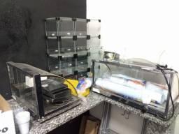 Duas estufas de salgado, baleiro, freezer e mesas conjugadas.
