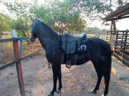 Título do anúncio: Cavalo Mangalarga.