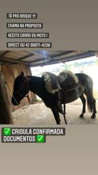 Título do anúncio: Égua crioula confirmada e com documentos