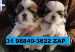 Canil Filhotes Cães Top BH Shihtzu Maltês Spitz Alemão Yorkshire Beagle Bulldog