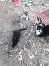 Doação filhotes de gatos