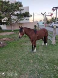 Título do anúncio: Vendo aceito troca menos cavalo