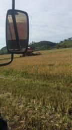 Título do anúncio: Porocuro arrozeiras para arrendar