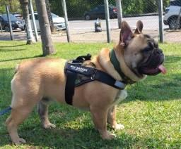 Título do anúncio: Bulldog Francês vai fazer 10meses