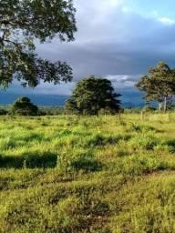 Fazenda em jangada 189 hectares