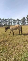 Égua Xucra - 7 anos