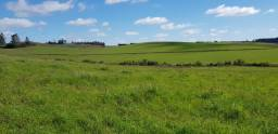 Granja 280 hectares
