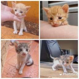 Baby cats adoção