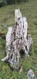 Toco envelhecido de cedro canjerana