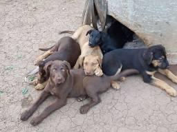 Título do anúncio: Doação de cães