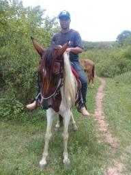 Égua pampa