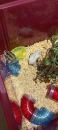 Título do anúncio: Vendo Hamster - Nova ninhada