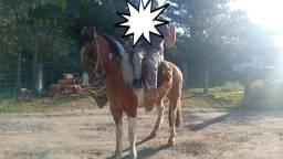 Título do anúncio: Cavalo tubiano