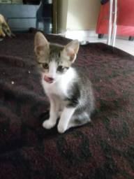 Doação de filhote de gato