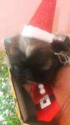 Presente de papai Noel