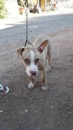 vende-se um  cachorro por 1.000 Reais