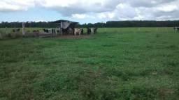 Fazenda - Rodovia Itabela - Caraíva - 298 ha