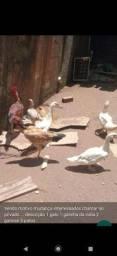 Venda de aves