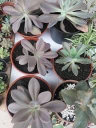 Kinder garden Suculentas