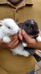 Casal de coelhos filhotes