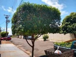 Limpeza de terreno pouda de árvore jardim cerca viva e hidráulica residencial